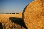 straw-bales-726977_1920